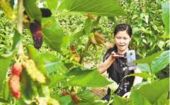 石家庄探索农产品线上营销新模式——田间瓜果香
